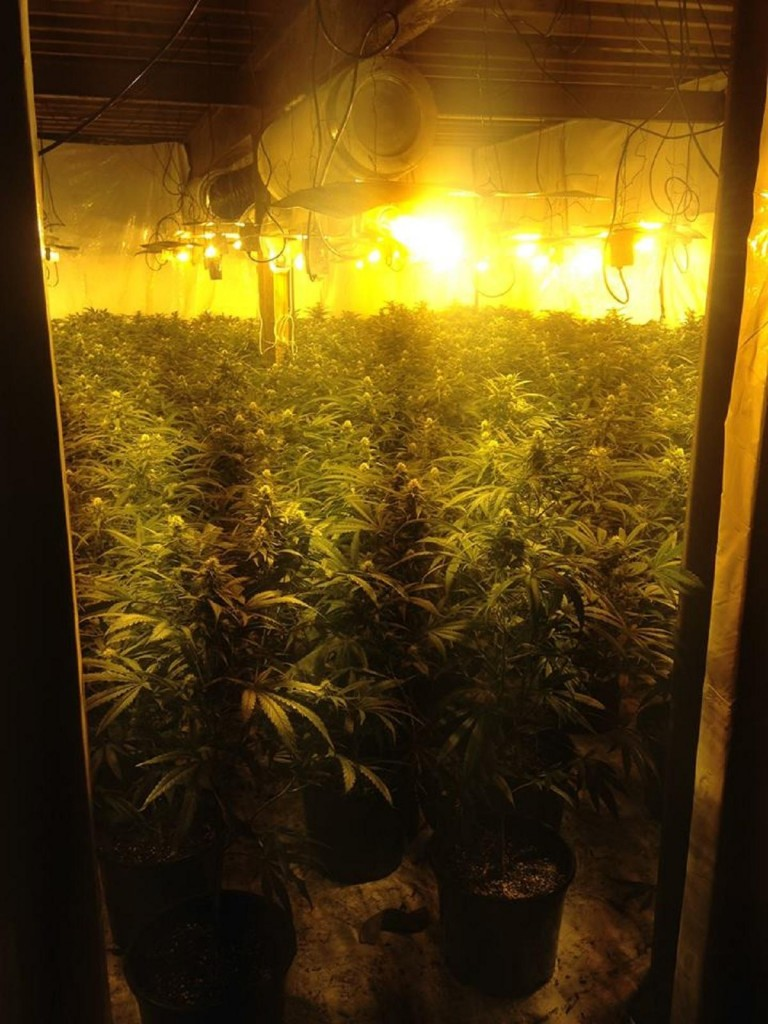 Shipley Ashley Lane cannabis farm.jpg.gallery